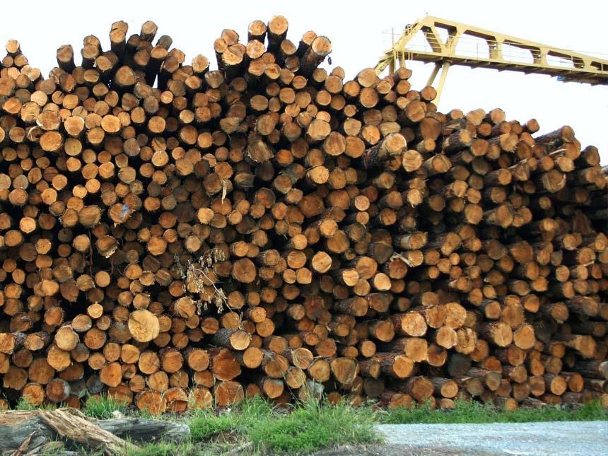 VNBL vend des grumes pour bois de sciage