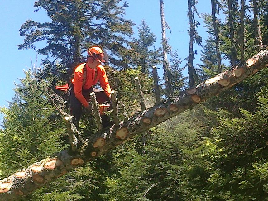 VNBL fournisseur de bois de sciage pour scierie