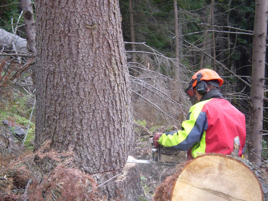 Travaux abattage de bois par des professionnels VNBL